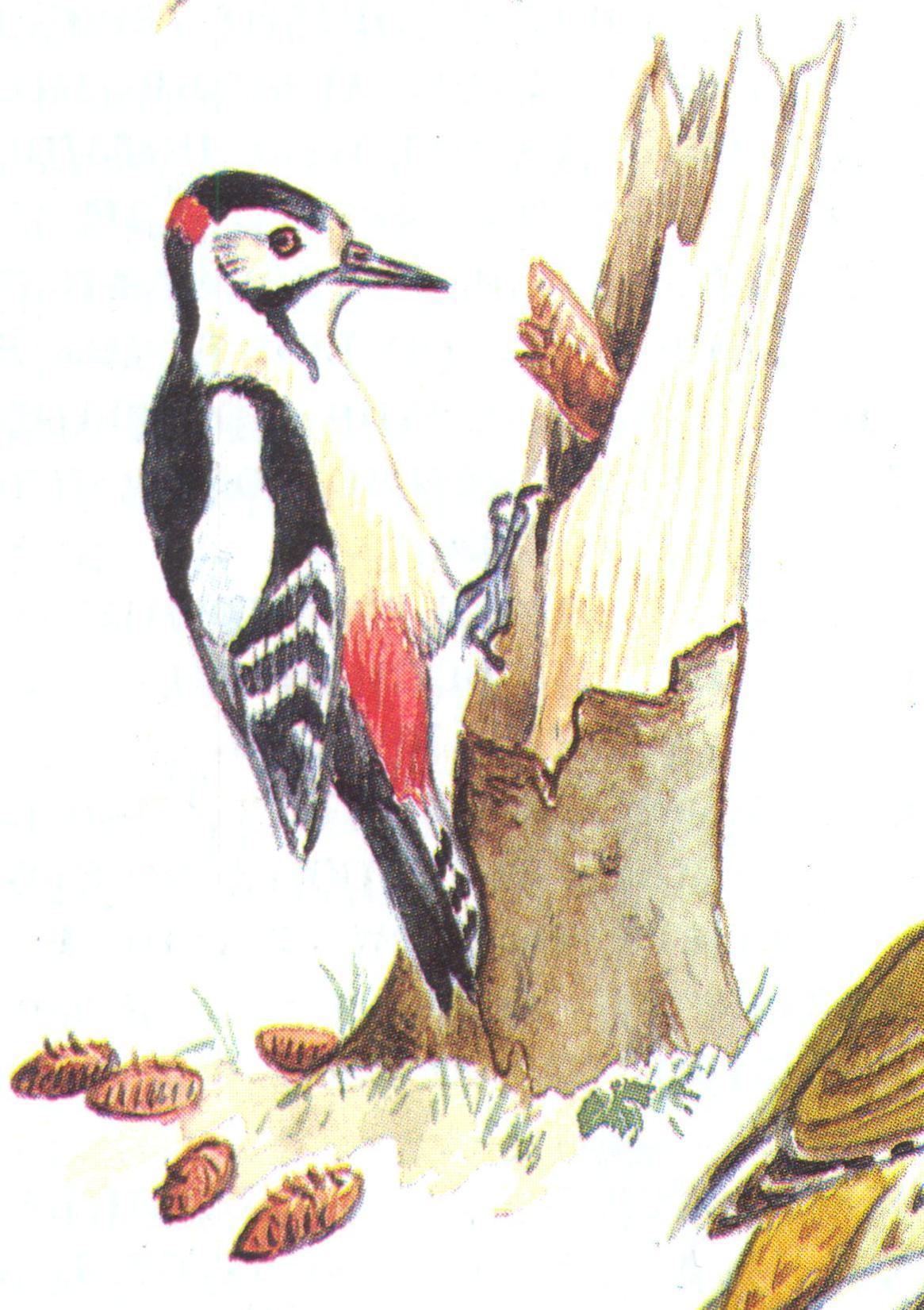 картинка дятел на дереве для детей
